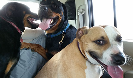 dog-obedience-training3